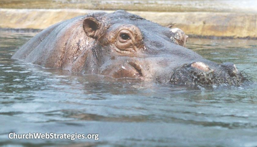 Web Team Meetings Part 3: Dealing with HIPPOs