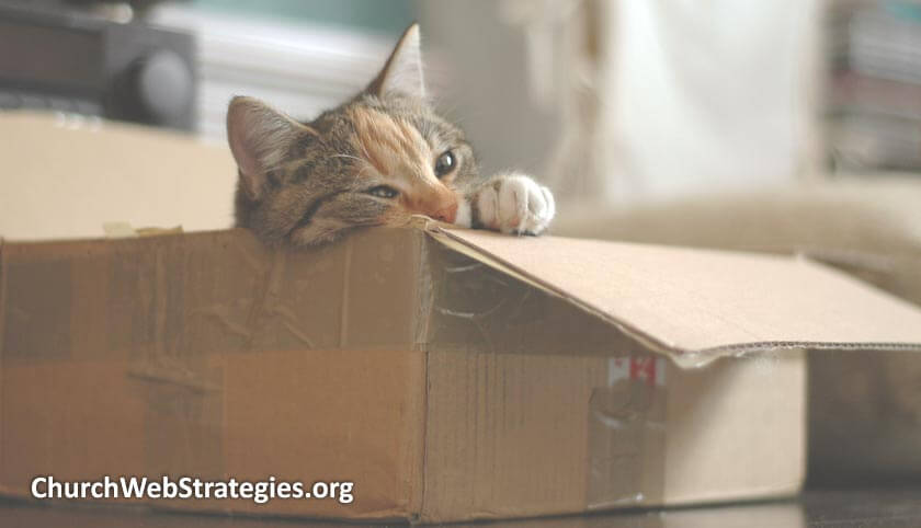 lazy cat laying in cardboard box